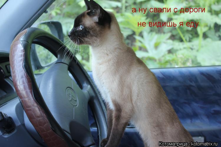 Котоматрица: а ну свали с дороги не видишь я еду