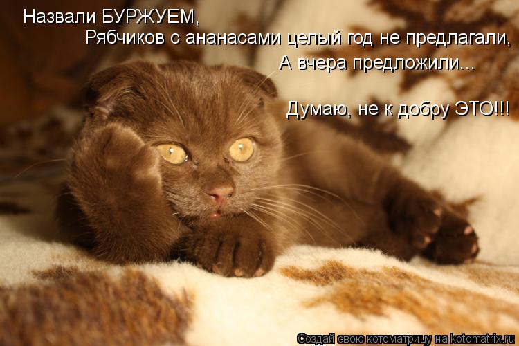 Котоматрица: Назвали БУРЖУЕМ, Рябчиков с ананасами целый год не предлагали, А вчера предложили... Думаю, не к добру ЭТО!!!