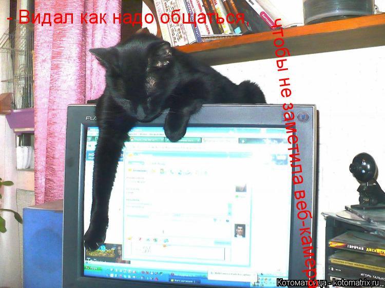 Котоматрица: - Видал как надо общаться, чтобы не заметила веб-камера