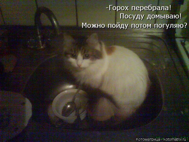 Котоматрица: -Горох перебрала!  Посуду домываю! Можно пойду потом погуляю?