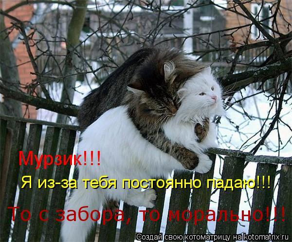 Котоматрица: Мурзик!!!  Я из-за тебя постоянно падаю!!! То с забора, то морально!!!