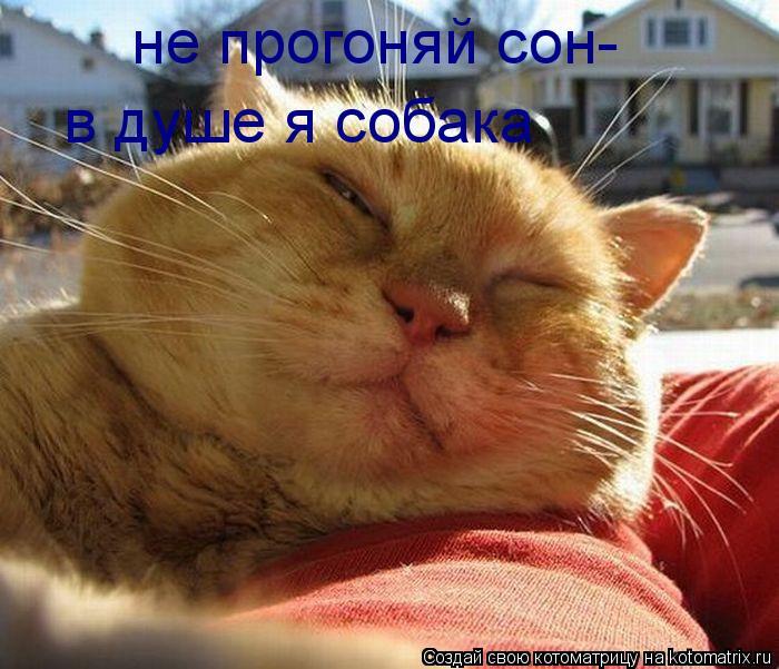 Котоматрица: не прогоняй сон- в душе я собака
