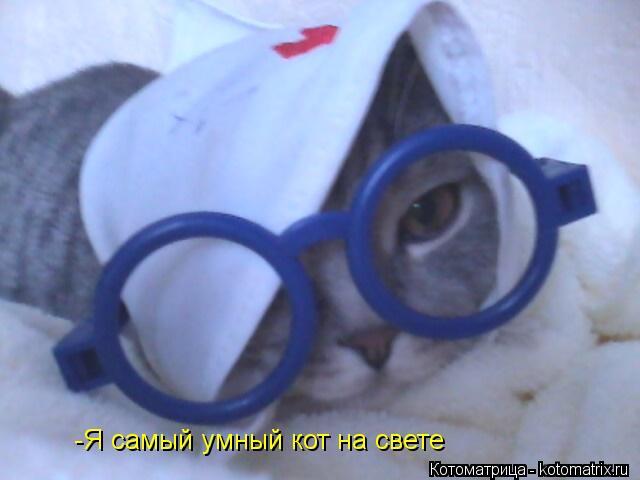 Котоматрица: -Я самый умный кот на свете