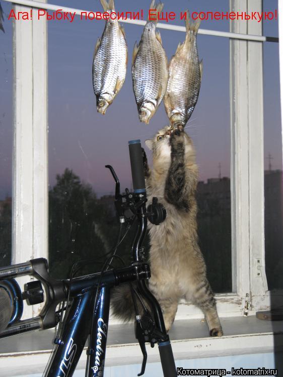 Котоматрица: Ага! Рыбку повесили! Еще и солененькую!