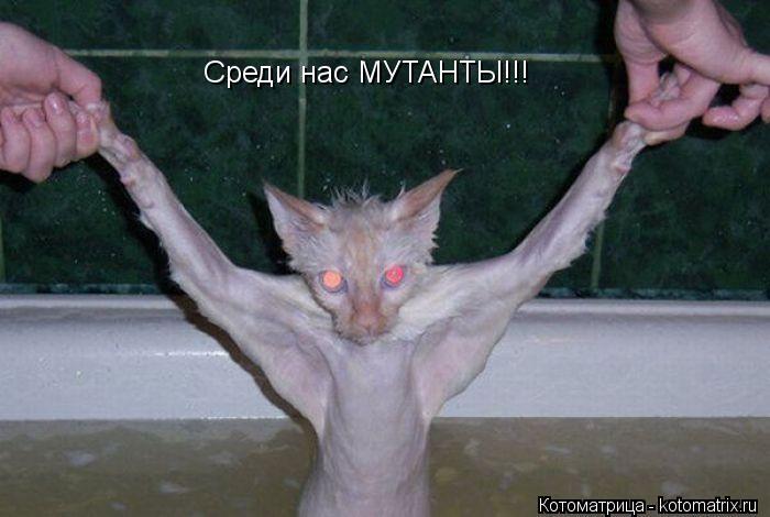 Котоматрица: Среди нас МУТАНТЫ!!!