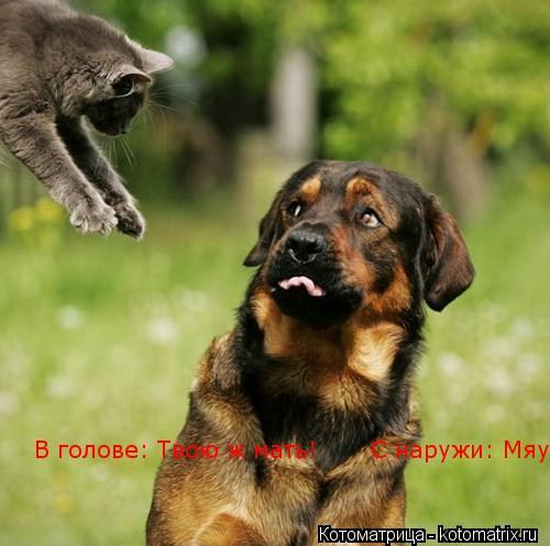 Котоматрица: В голове: Твою ж мать!       С наружи: Мяу!