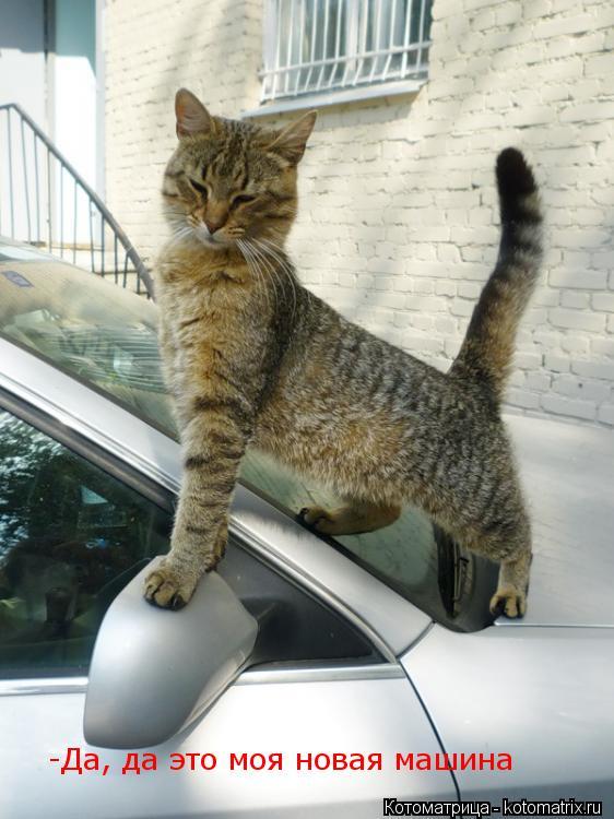 Котоматрица: -Да, да это моя новая машина
