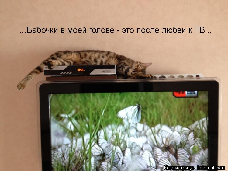 Котоматрица: ...Бабочки в моей голове - это после любви к ТВ...