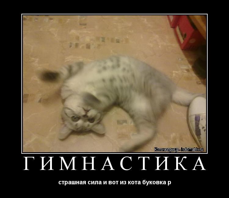 Котоматрица: гимнастика страшная сила и вот из кота буковка р