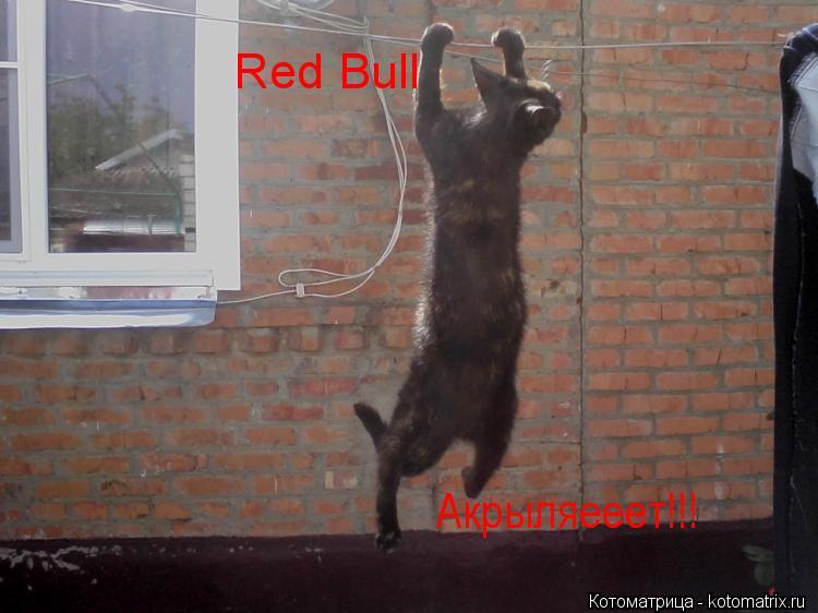 Котоматрица: Red Bull  Акрыляееет!!!