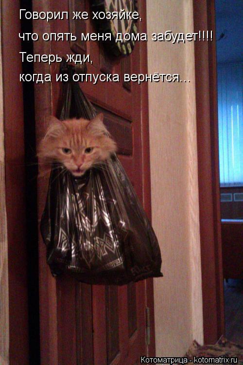 Котоматрица: Говорил же хозяйке, что опять меня дома забудет!!!! Теперь жди,  когда из отпуска вернётся...