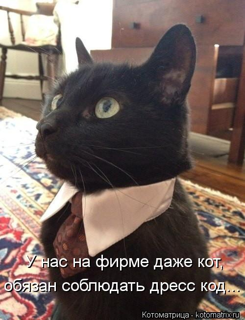 Котоматрица: У нас на фирме даже кот, обязан соблюдать дресс код...
