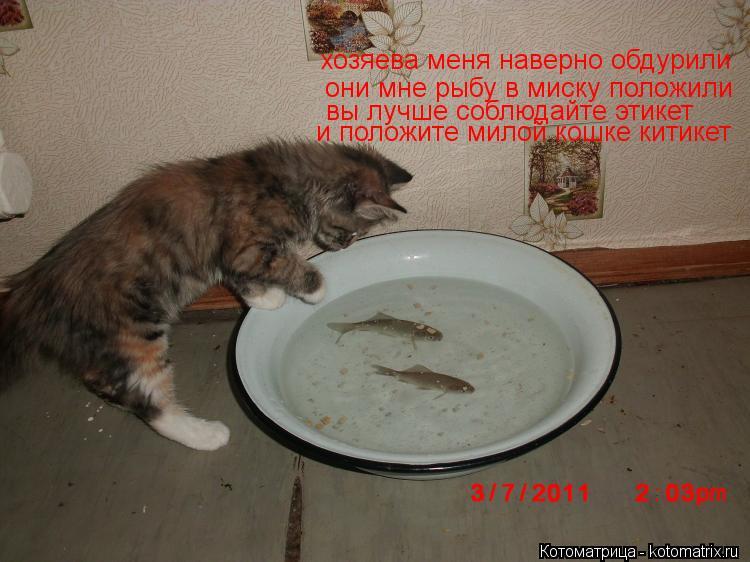 Котоматрица: они мне рыбу в миску положили хозяева меня наверно обдурили вы лучше соблюдайте этикет и положите милой кошке китикет