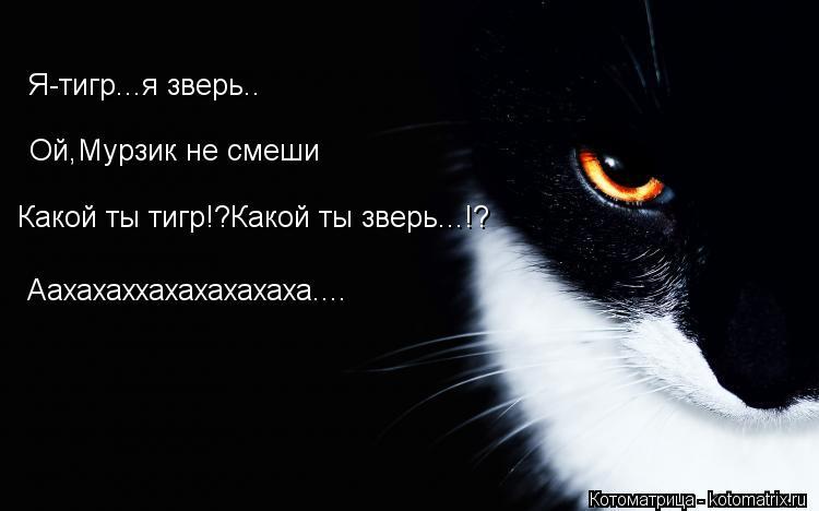 Котоматрица: Я-тигр...я зверь.. Ой,Мурзик не смеши Какой ты тигр!?Какой ты зверь...!? Аахахаххахахахахаха....