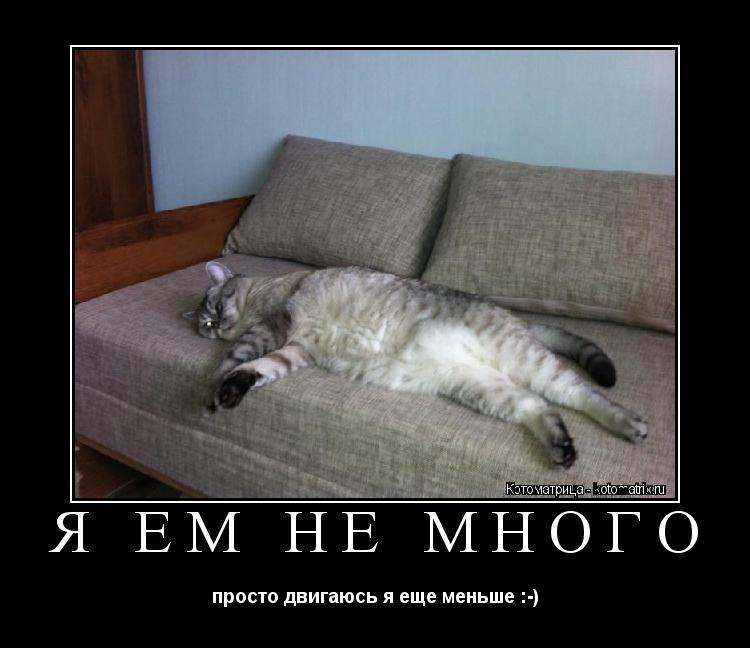 Котоматрица: Я ем не много просто двигаюсь я еще меньше :-)