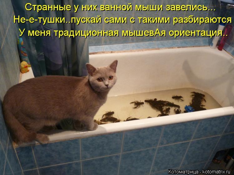 Котоматрица: Странные у них ванной мыши завелись... Не-е-тушки..пускай сами с такими разбираются У меня традиционная мышевАя ориентация..