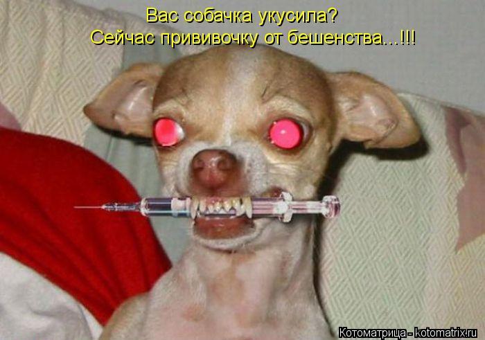 Boxer dog has blood i pee
