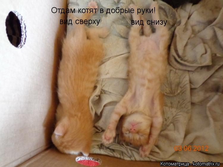 Котоматрица: Отдам котят в добрые руки! вид снизу вид сверху