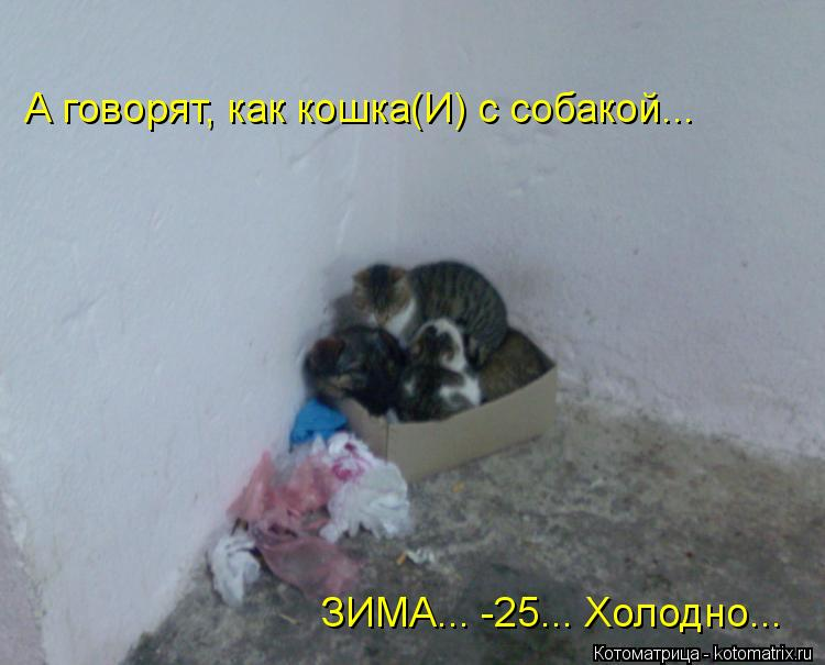 Котоматрица: А говорят, как кошка(И) с собакой... ЗИМА... -25... Холодно...
