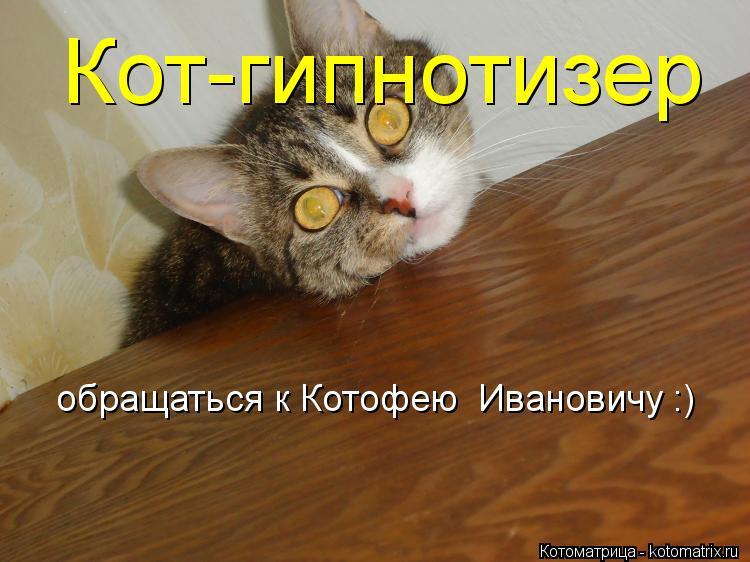 Котоматрица: Кот-гипнотизер обращаться к Котофею  Ивановичу :)