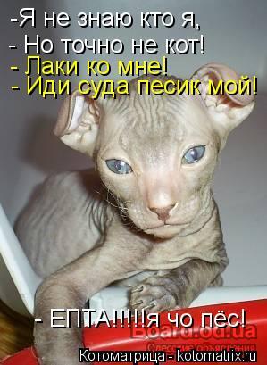 Котоматрица: -Я не знаю кто я, - Но точно не кот! - Лаки ко мне! - Иди суда песик мой! - ЕПТА!!!!!я чо пёс!