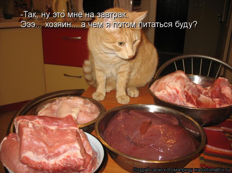 Котоматрица: -Так, ну это мне на завтрак . Эээ... хозяин... а чем я потом питаться буду?
