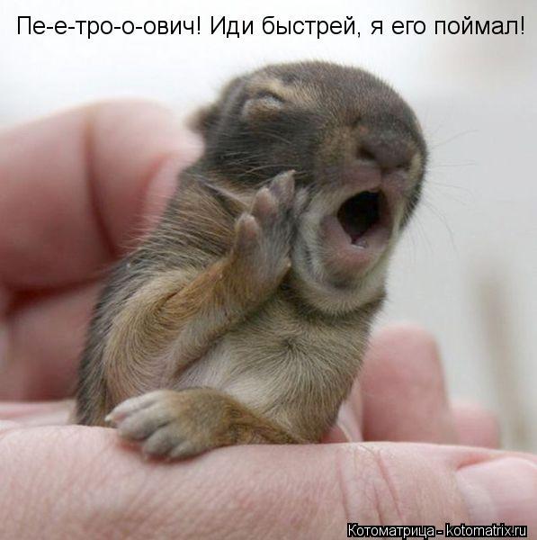 Котоматрица: Пе-е-тро-о-ович! Иди быстрей, я его поймал!