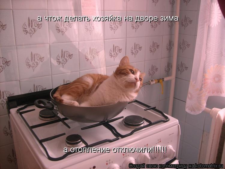 Котоматрица: а чтож делать хозяйка на дворе зима а отопление отключили!!!!!!