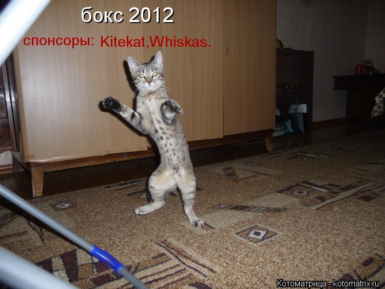 Котоматрица: бокс 2012 Kitekat,Whiskas. спонсоры: