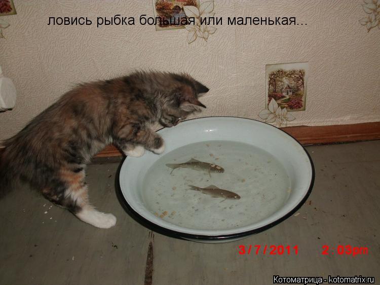 Котоматрица: ловись рыбка большая или маленькая...