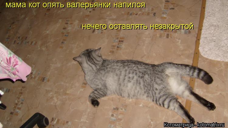 Котоматрица: мама кот опять валерьянки напился нечего оставлять незакрытой