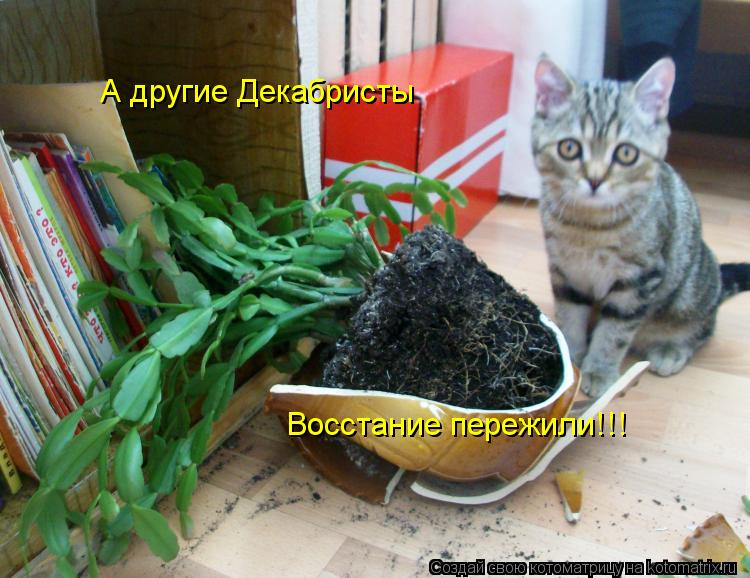 Котоматрица: А другие Декабристы  Восстание пережили!!!