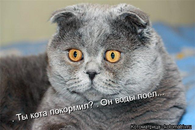 Котоматрица: — Ты кота покормил? — Он воды поел...
