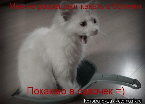 Котоматрица: Мне не разрешают какать в ботинки Покакаю в савочек =)