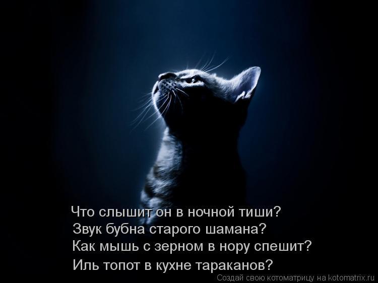 Котоматрица: Что слышит он в ночной тиши? Звук бубна старого шамана? Как мышь с зерном в нору спешит? Иль топот в кухне тараканов?