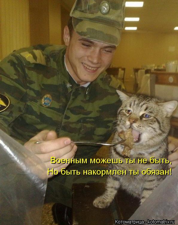 Котоматрица: Военным можешь ты не быть, Военным можешь ты не быть, Но быть накормлен ты обязан!