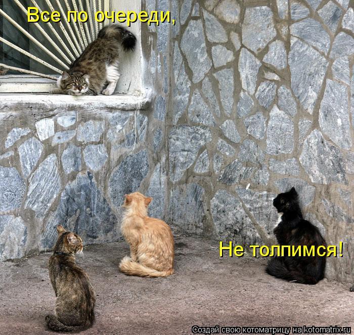 Котоматрица: Все по очереди, Не толпимся!