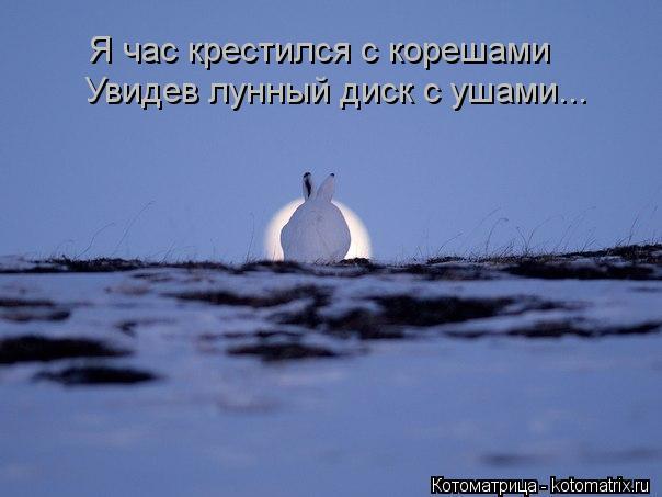 Котоматрица: Увидев лунный диск с ушами... Я час крестился с корешами