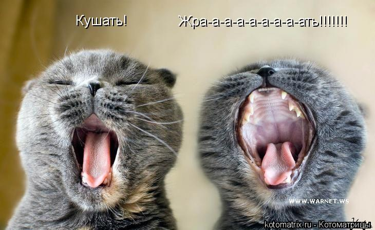 Котоматрица: Кушать! Жра-а-а-а-а-а-а-а-ать!!!!!!!