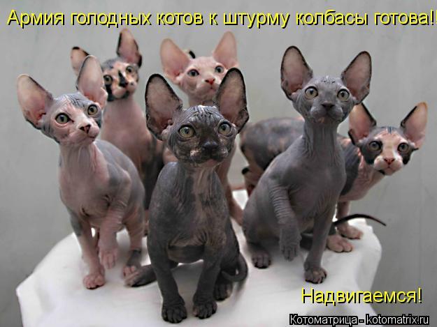 Котоматрица: Армия голодных котов к штурму колбасы готова!! Надвигаемся!