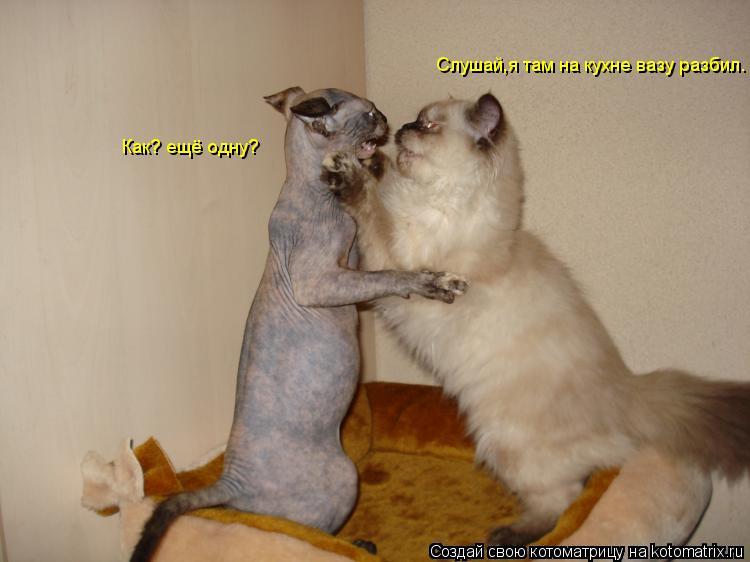 Котоматрица: Слушай,я там на кухне вазу разбил. Как? ещё одну?