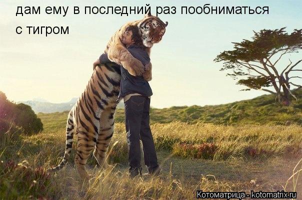 Котоматрица: дам ему в последний раз пообниматься  с тигром