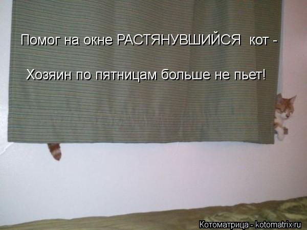 Котоматрица: Хозяин по пятницам больше не пьет! Помог на окне РАСТЯНУВШИЙСЯ  кот -