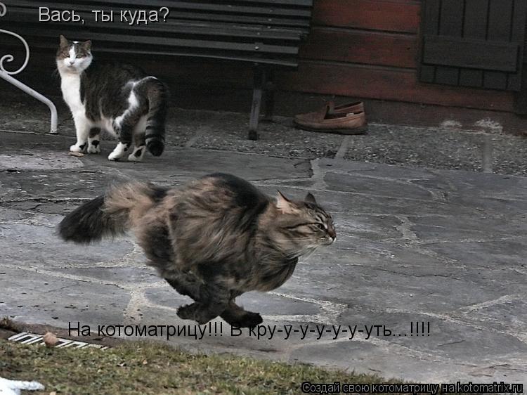 Котоматрица: Вась, ты куда? На котоматрицу!!! В кру-у-у-у-у-у-уть...!!!!