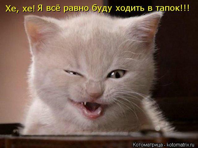 Котоматрица: Хе, хе! Я всё равно буду ходить в тапок!!!