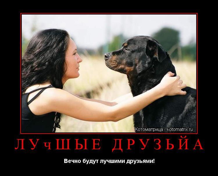 Котоматрица: Лучшые друзьйа Вечно будут лучшими друзьями!