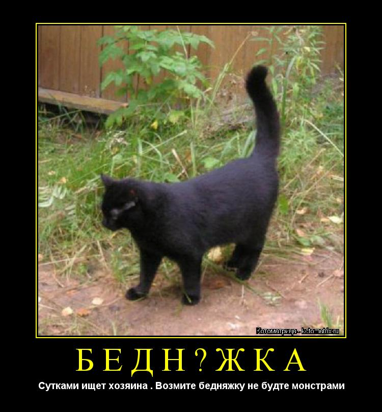 Котоматрица: бедняжка Сутками ищет хозяина . Возмите бедняжку не будте монстрами