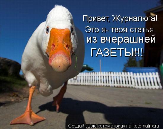 Котоматрица: Привет, Журналюга! Это я- твоя статья из вчерашней  ГАЗЕТЫ!!!