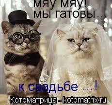 Котоматрица: мяу мяу! мы гатовы к свадьбе ... ...!
