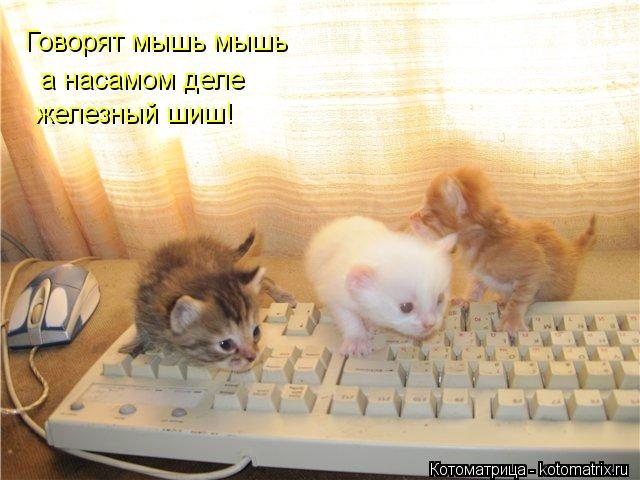Котоматрица: Говорят мышь мышь а насамом деле железный шиш!